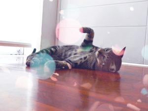 Katze auf Katzenminze