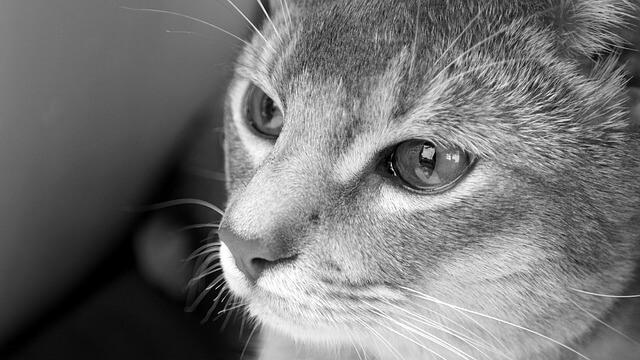 Traurig guckende Katze
