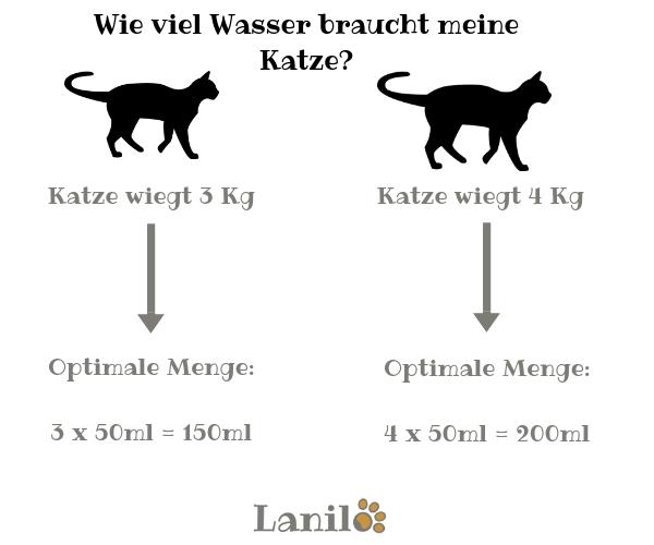 Wie viel Wasser braucht eine Katze?