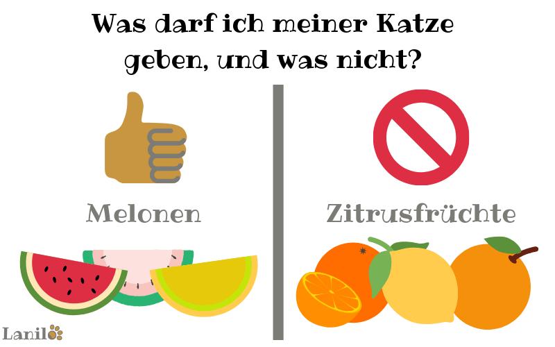 Melone für Katze: Ja oder nein?