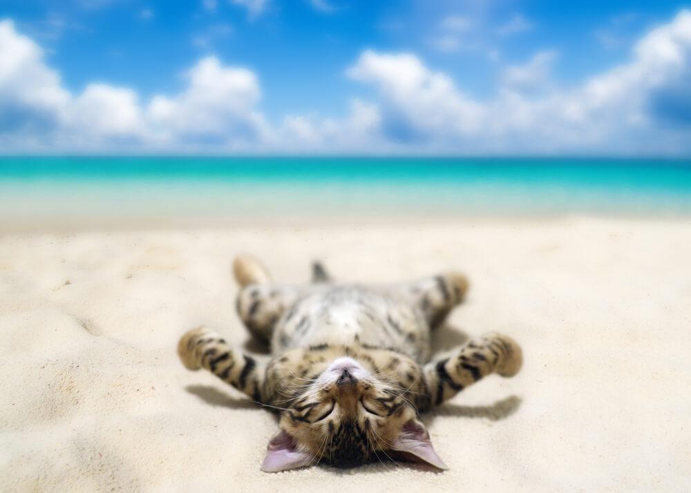 Katze liegt am Strand und sonnt sich