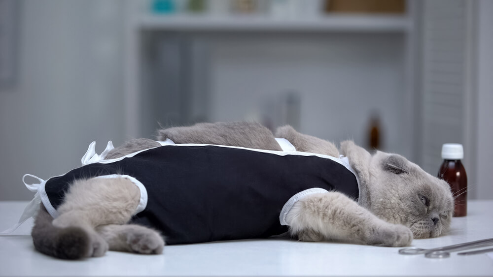 Katze nach Kastration