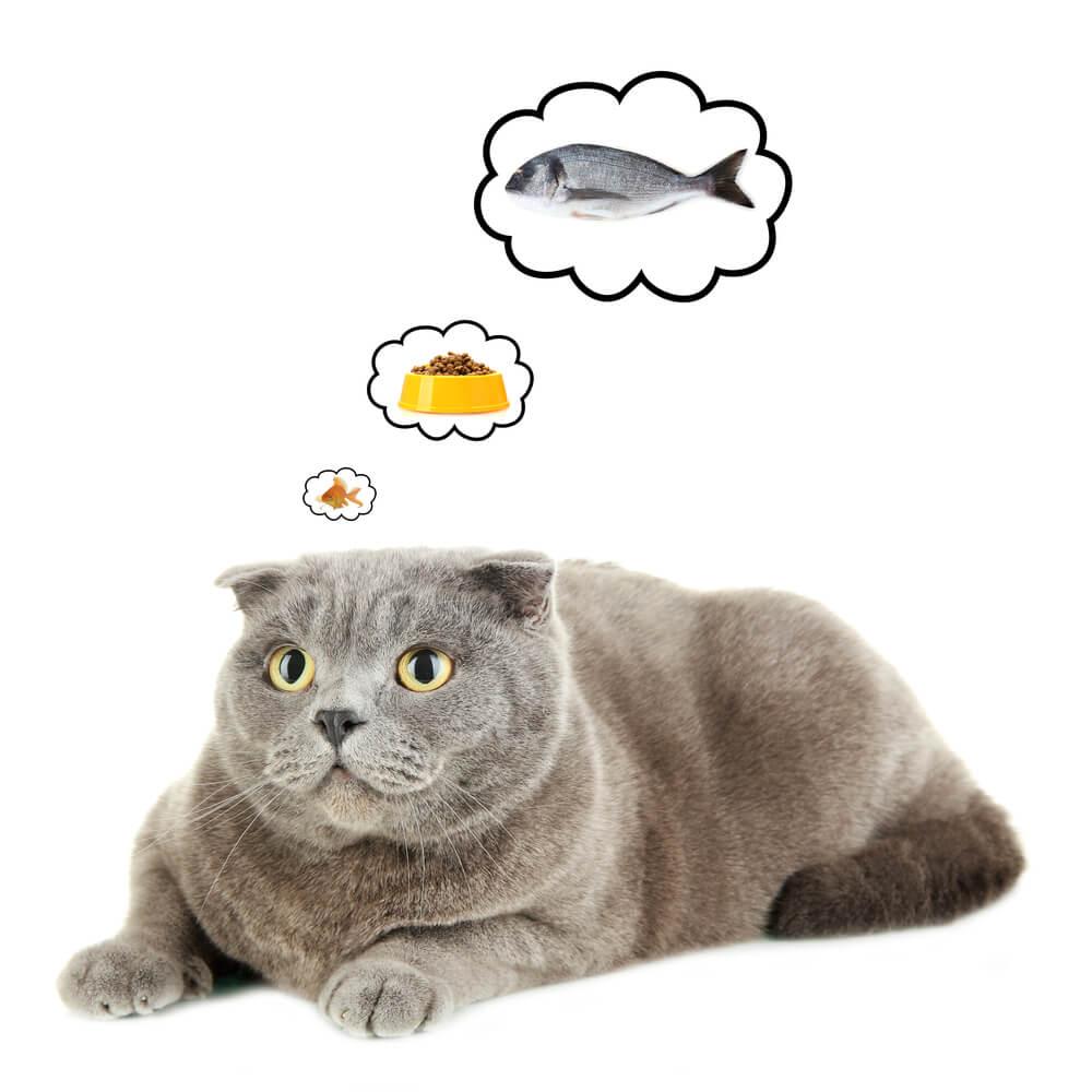 Katze träumt vom Fressen