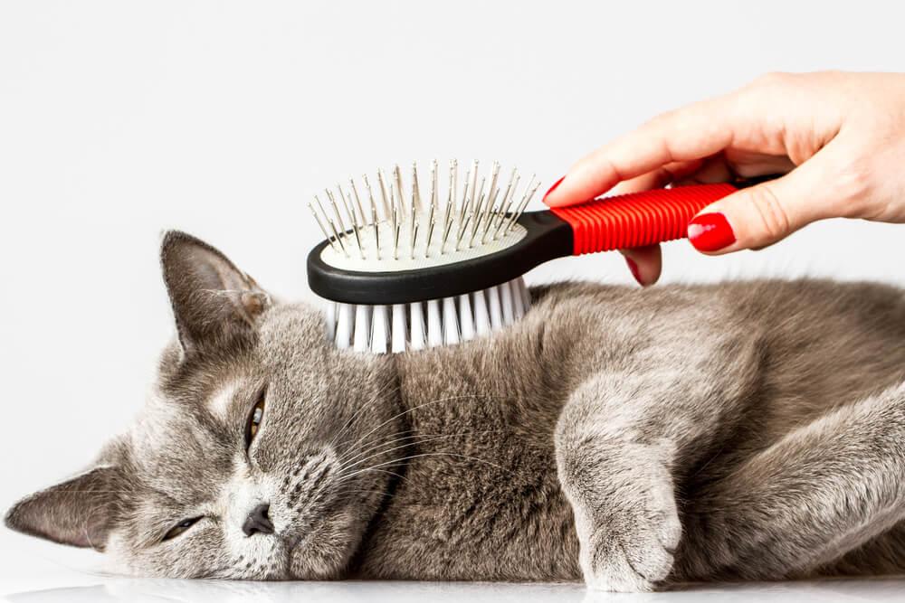 Katze wird gekämmt