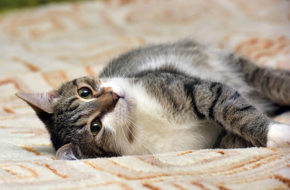 Katze hat es gemütlich
