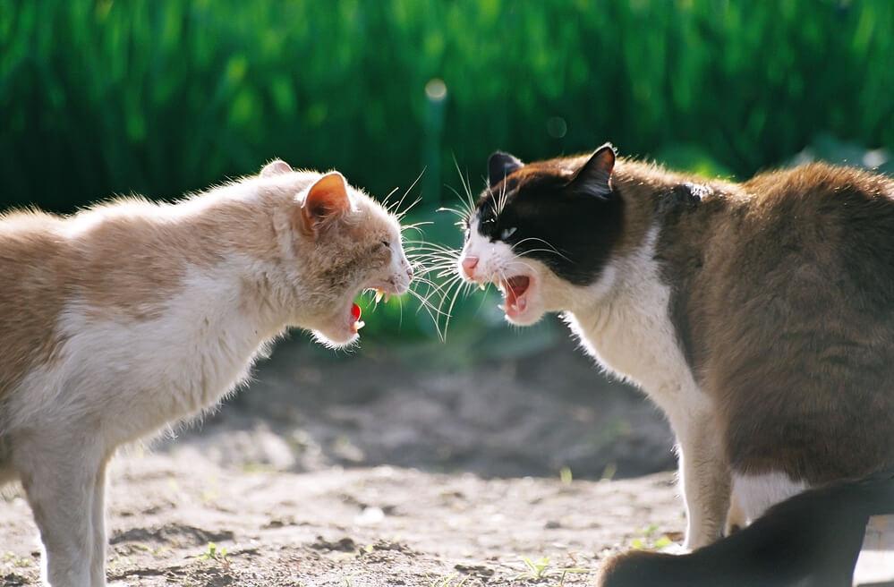 Wütende Katzen