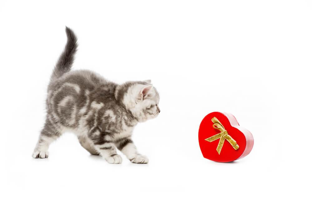 Katze mit Geschenk