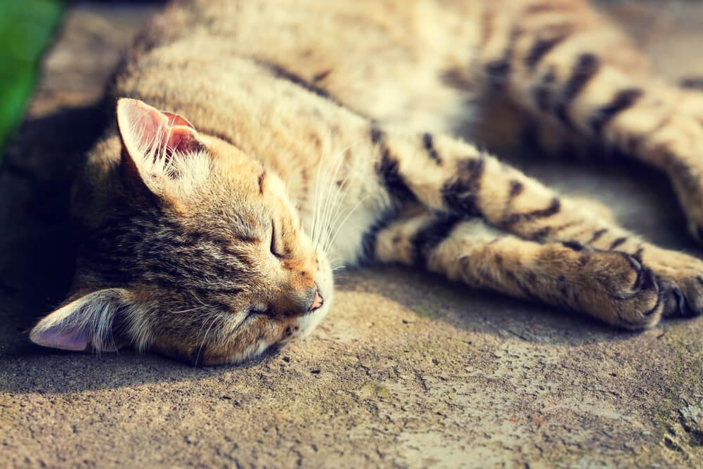 Katze tot